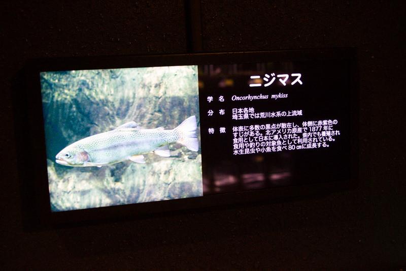 IMG_1406-saitama-suizokukan