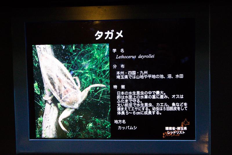 IMG_1524-saitama-suizokukan