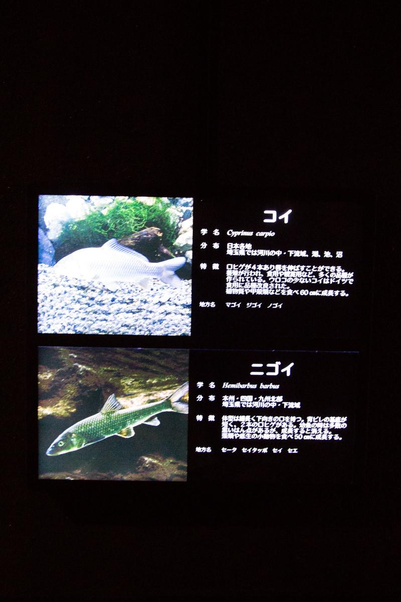 IMG_1568-saitama-suizokukan