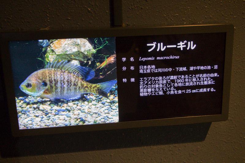 IMG_1601-saitama-suizokukan