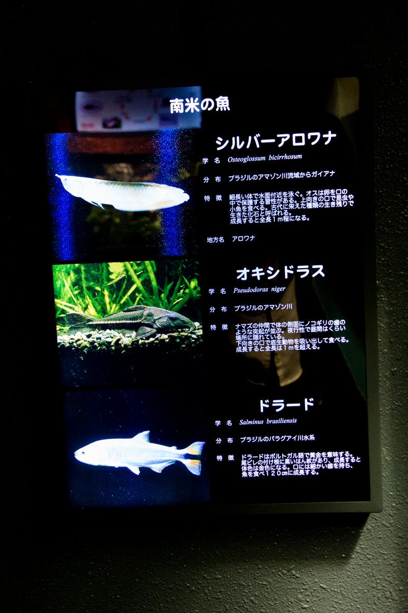 IMG_1642-saitama-suizokukan